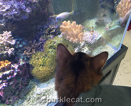 I wonder if clownfish taste like tuna?