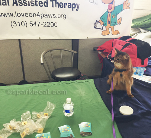 therapy cat at table at Camp Run-a-Mutt