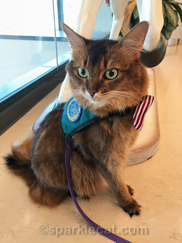 therapy cat getting ready to make happy paws and do some visits