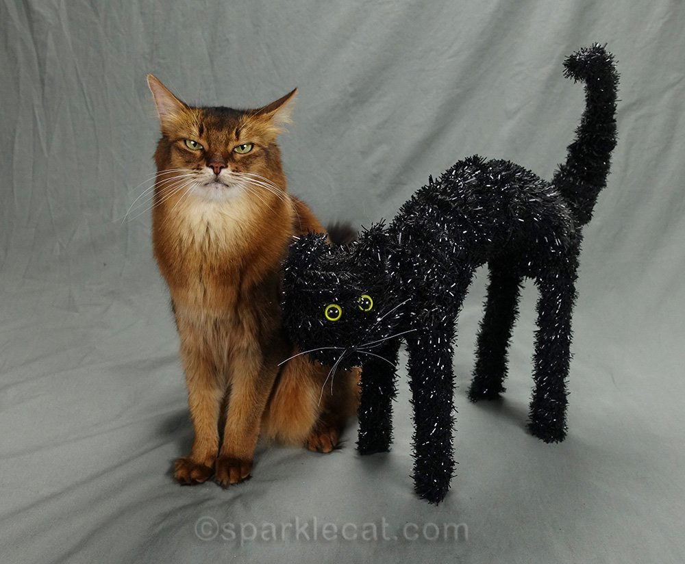 somali cat not sure she approves of Halloween prop