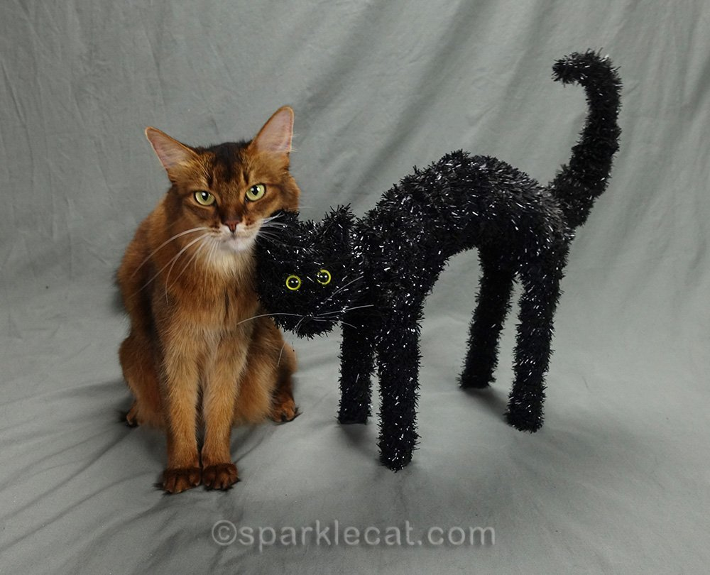 somali cat with face next to Halloween cat