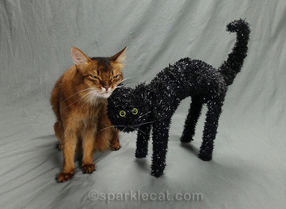 Somali cat rubs against Halloween prop