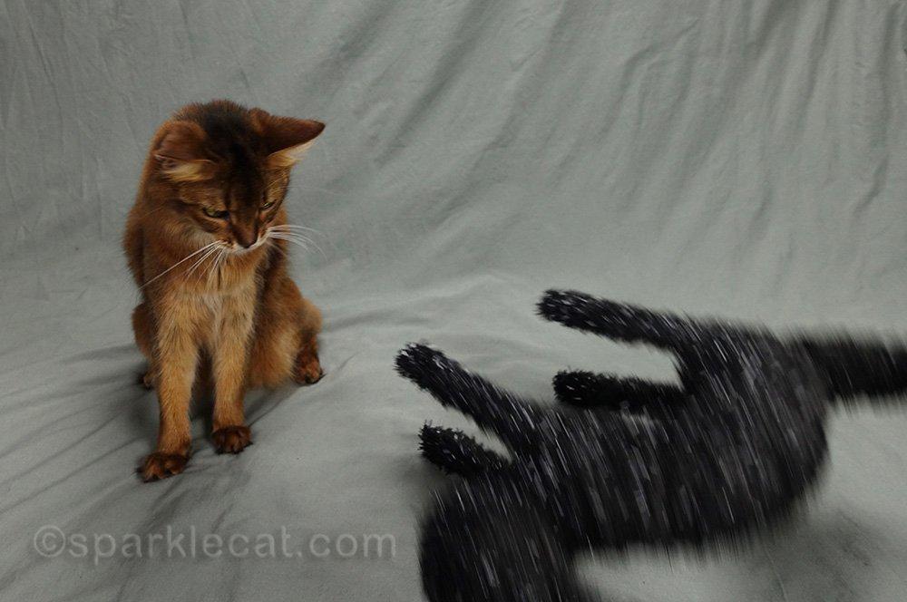 somali cat looks at knocked over Halloween cat