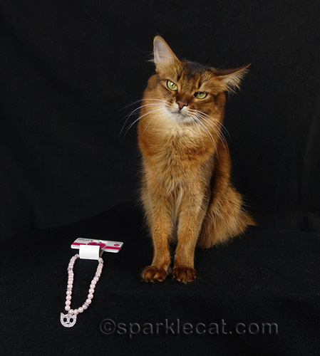 somali cat with cat necklace.