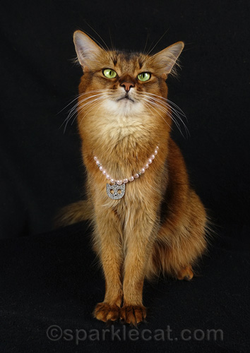 somali cat posing dramatically with cat necklace