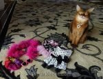 somali cat with wardrobe choices for Meow MeetUp