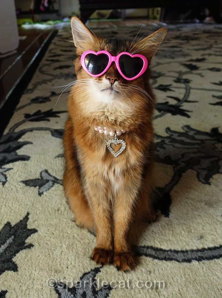 somali cat wearing her pink heart sunglasses