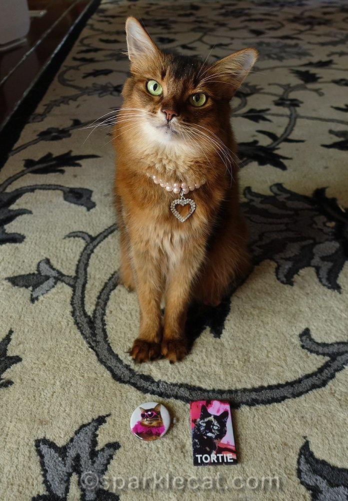 somali cat posing with new refrigerator magnets