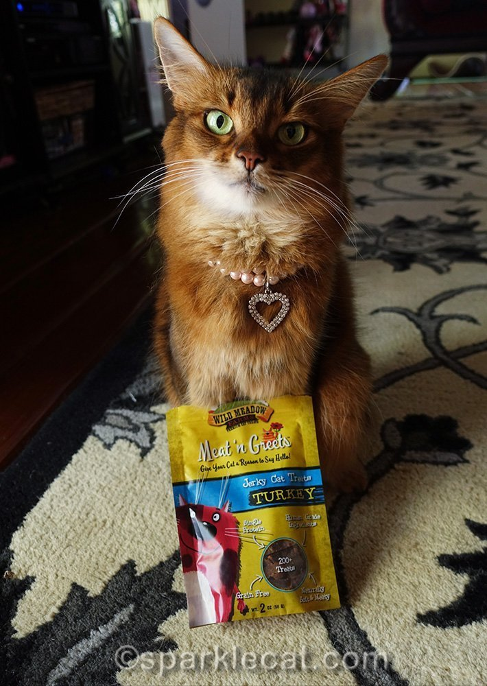 somali cat with Meat and Greet treats