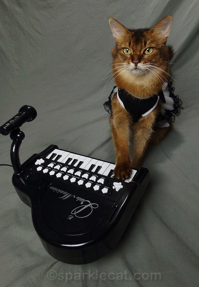 somali cat with paw on tiny piano