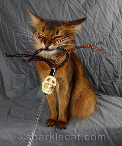 somali cat biting skull toy