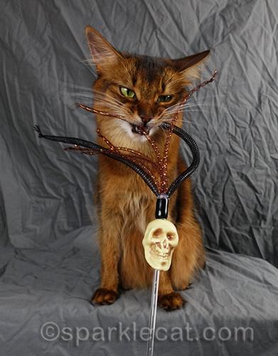 somali cat vainly attempts to kill skull cat toy