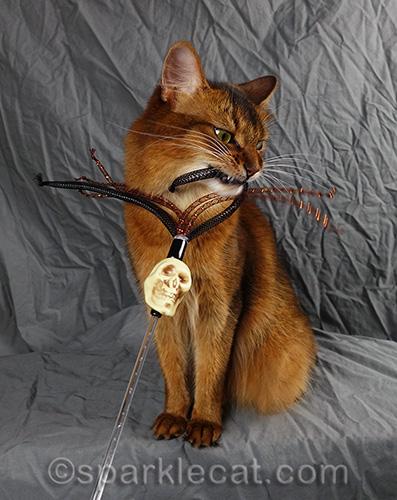 somali cat gives skull toy the killing bite