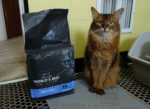 somali cat with 6 lb bag of World's Best Cat Litter Zero Mess