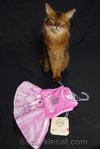 somali cat with princess dress