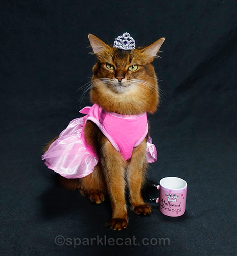 somali cat with princess dress, crown, and Hollywood Princess mug