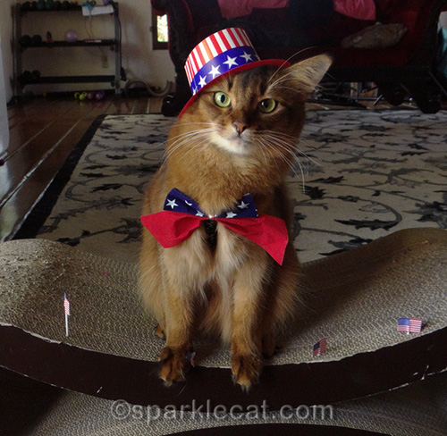 somali cat wearing Uncle Sam hat over one ear
