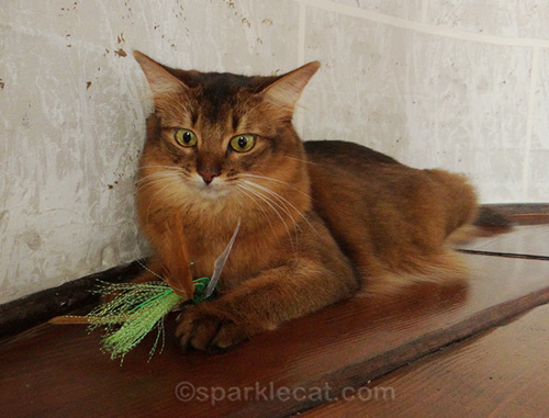 somali cat in never-before-seen outtake