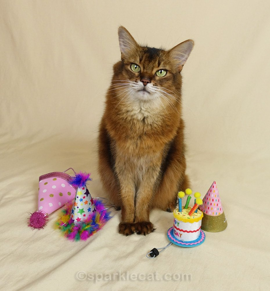 It's Summer's human's birthday, so Summer has a bunch of birthday hats to try on.