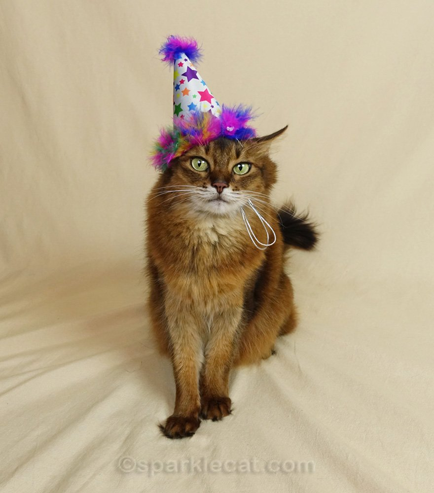 somali cat wearing a colorful birthday hat with feather trim