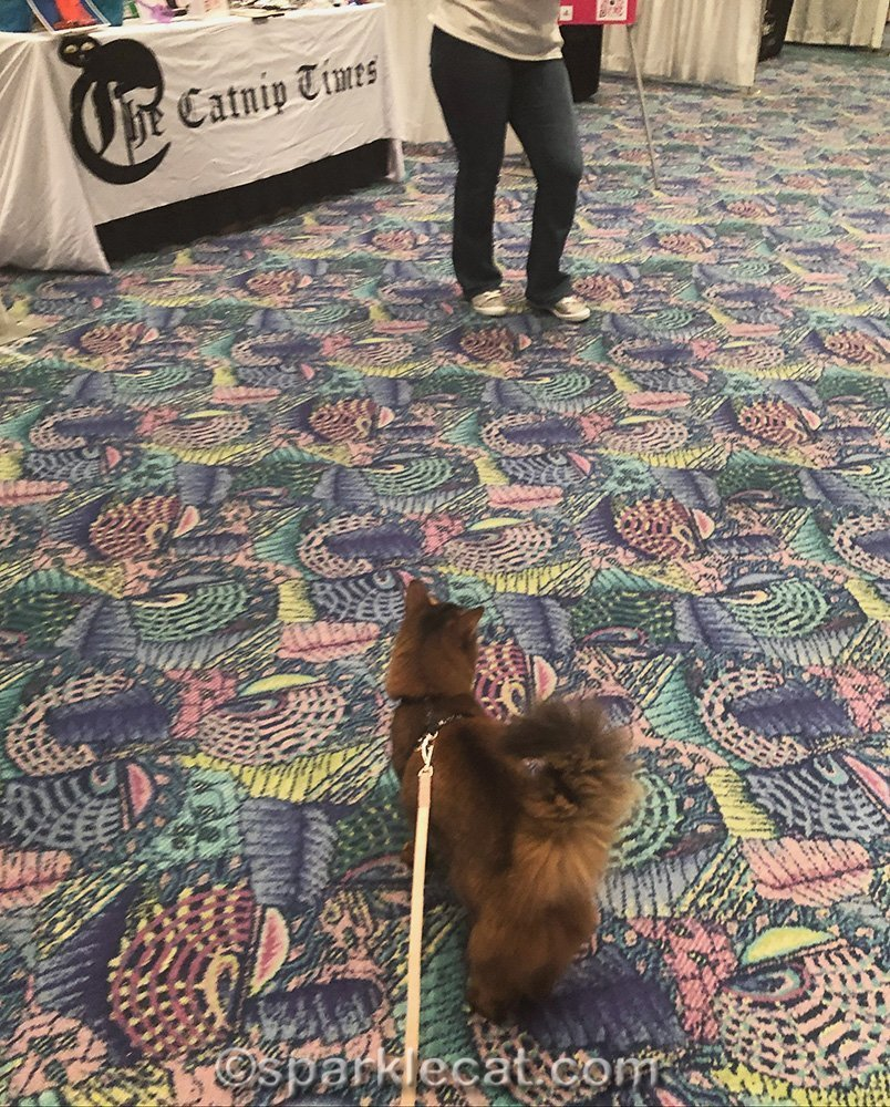 somali cat on floor of Meow MeetUp
