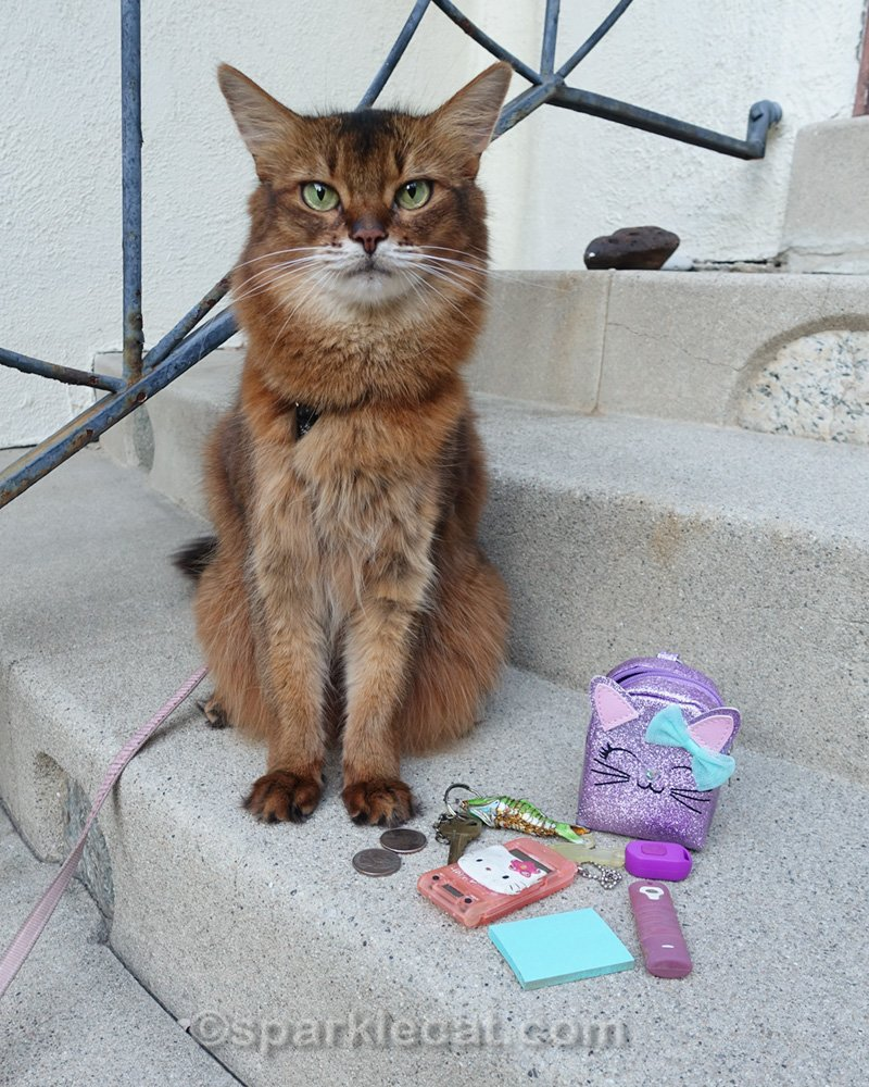 Somali cat with all the things from inside her backpack