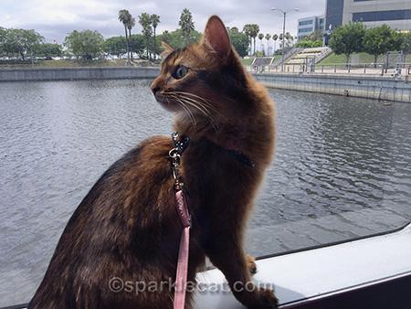 Somali cat, catalina ferry, catalina island