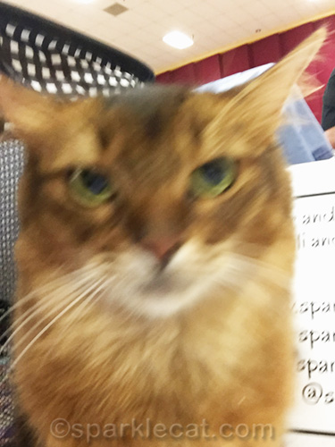 blurry selfie of somali cat at cat show