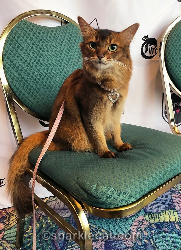 impatient celebrity cat waiting for photos to be done