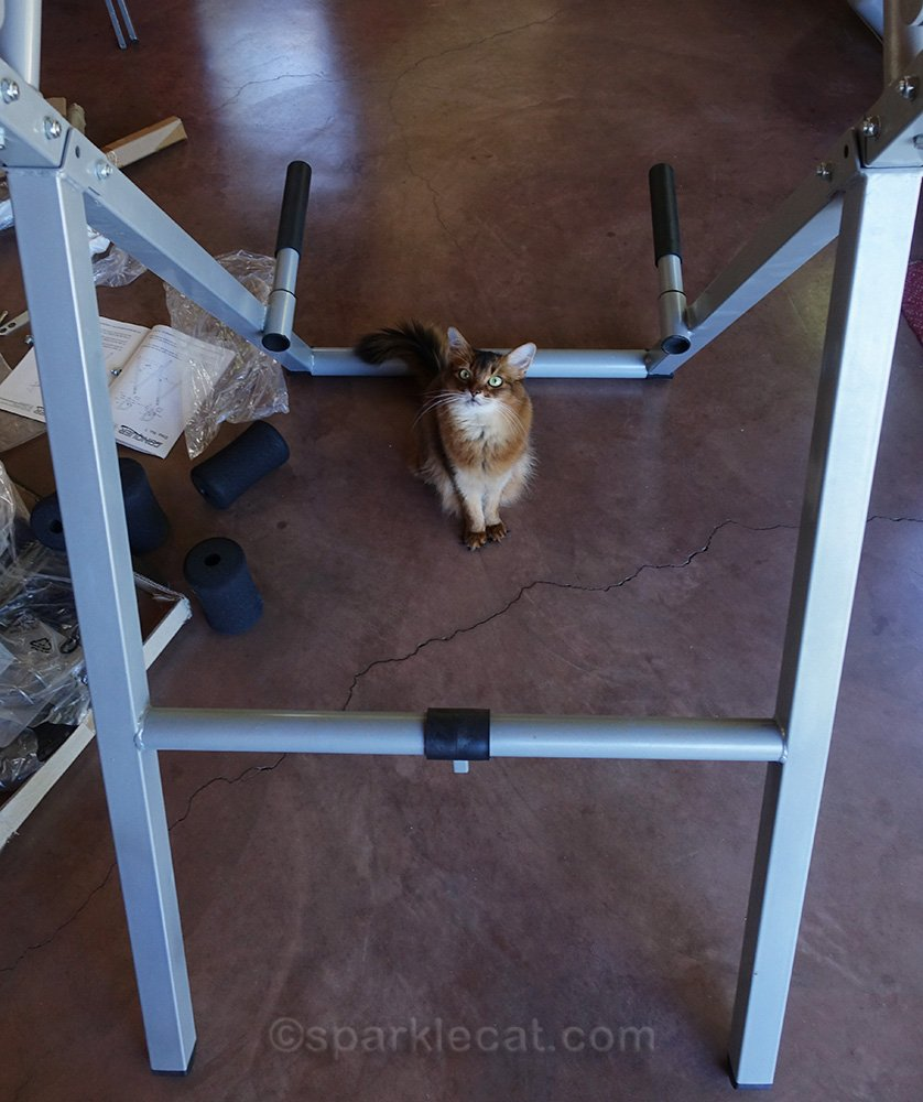 Summer helps her human assemble an inversion table.