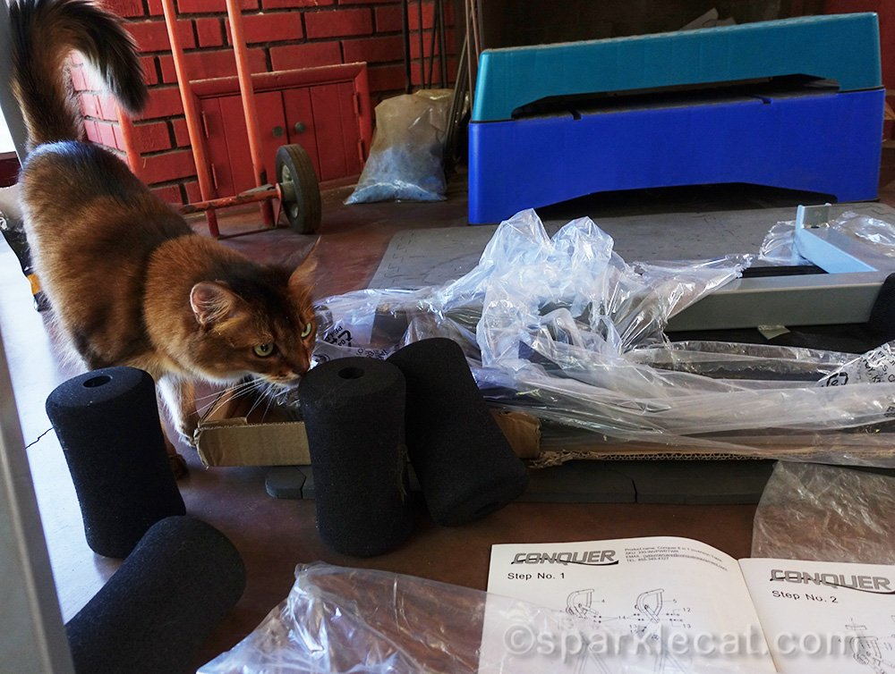 somali cat checking out parts of inversion table for assembly