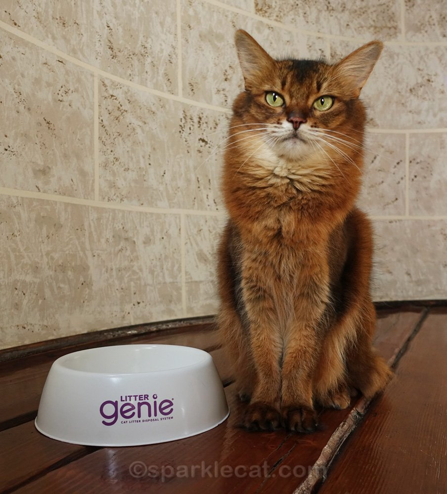 Summer has some modeling practice with her front paws in a bowl. She explains why in the blog post.