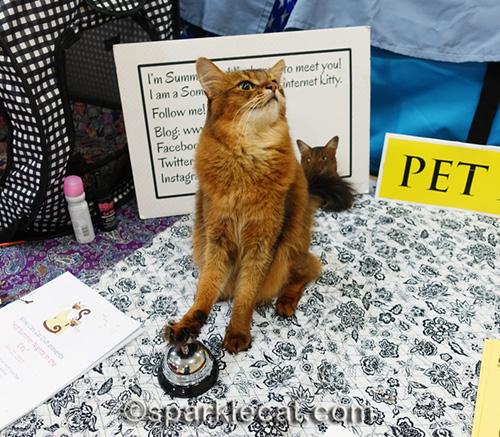 pet me cat ringing a desk bell at cat show