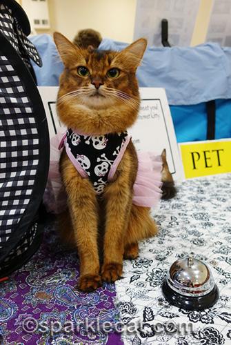 somali cat in skull tulle dress