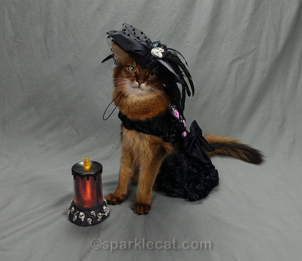somali cat modeling Halloween outfit
