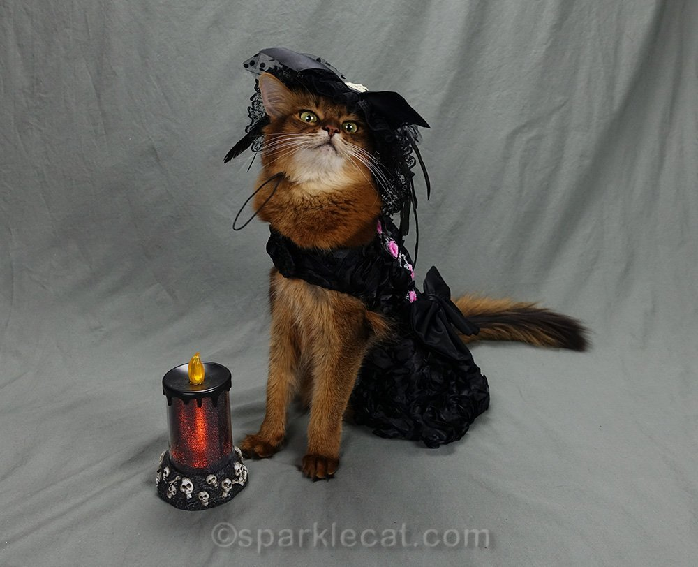 somali cat with calendar prop audition part two