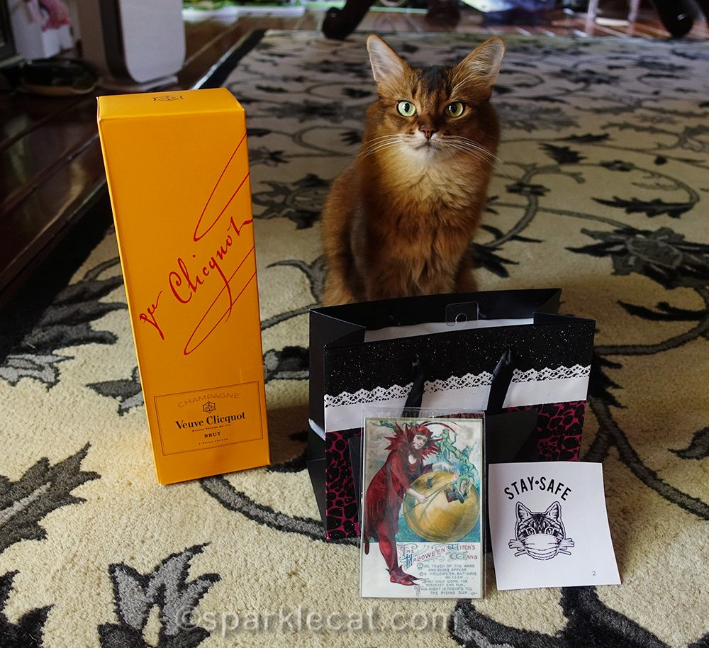 somali cat with birthday gifts and Veuve Clicquot champagne