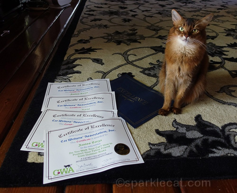 somali cat with CWA Certificates of Excellence