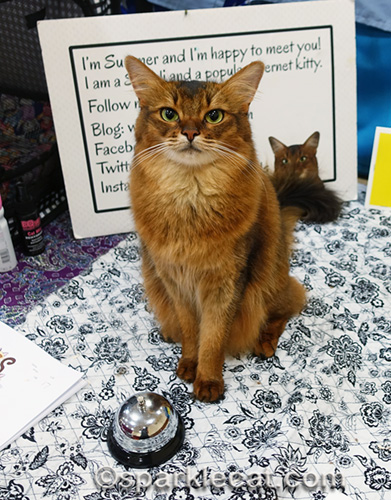 somali cat at cat show as Pet Me Cat