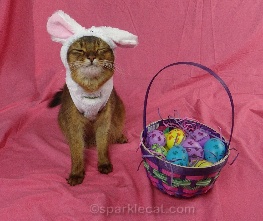 somali cat in bunny outfit with eyes shut
