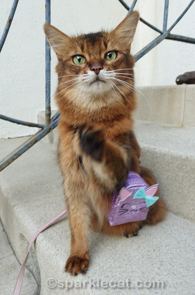 Somali cat with backpack, waving bye-bye, but blurry