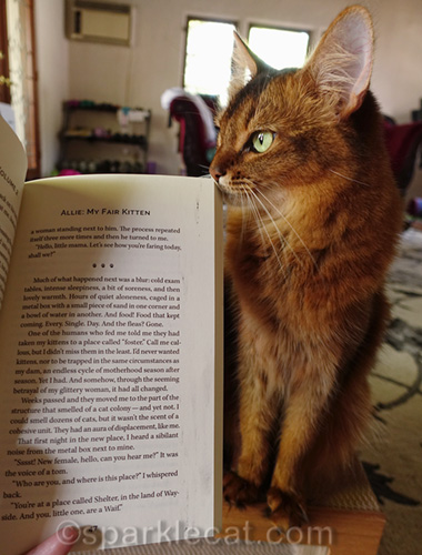 somali cat posing with flawed pages of Rescued 2
