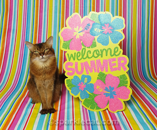 somali cat in summertime photo session