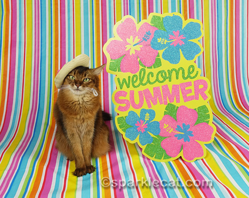 somali cat in straw hat with welcome summer sign