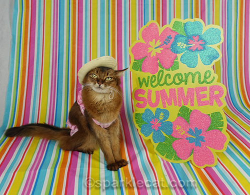 Somali cat in hat and bikini with welcome summer sign