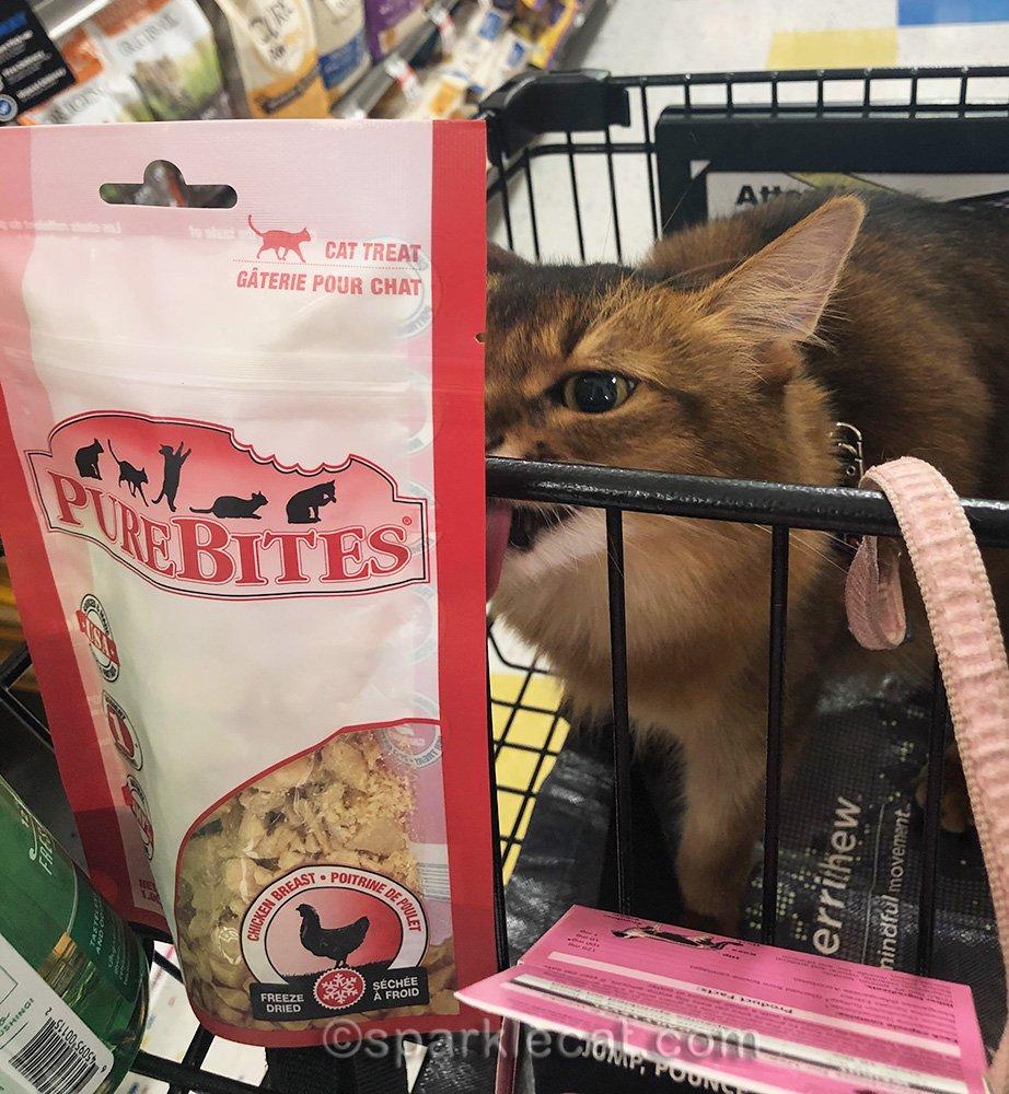 somali cat licking cat treat bag