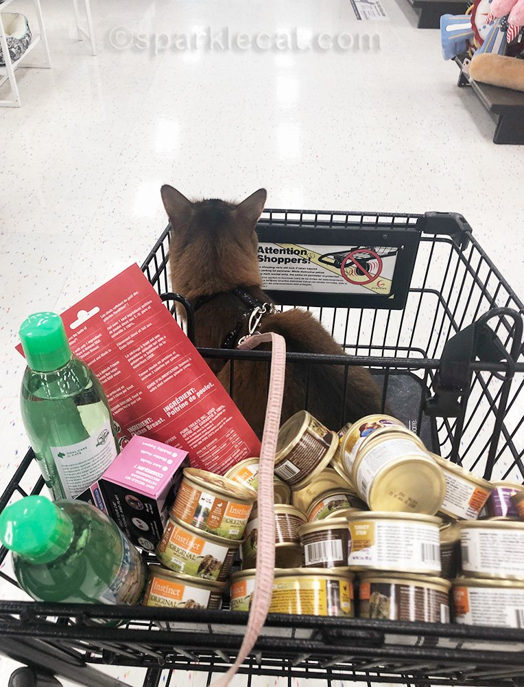 somali cat in shopping cart, on the way to check out