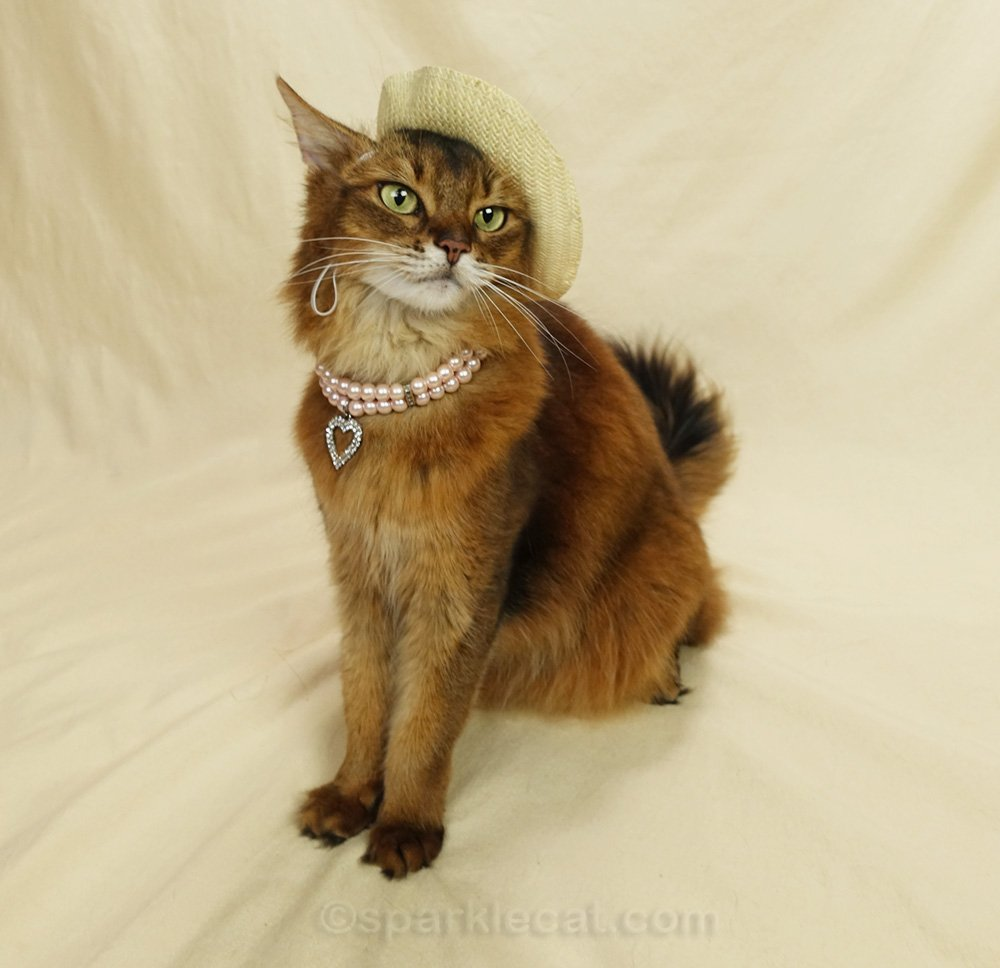 Somali cat wearing a straw hat and a pearl necklace with a rhinestone heart