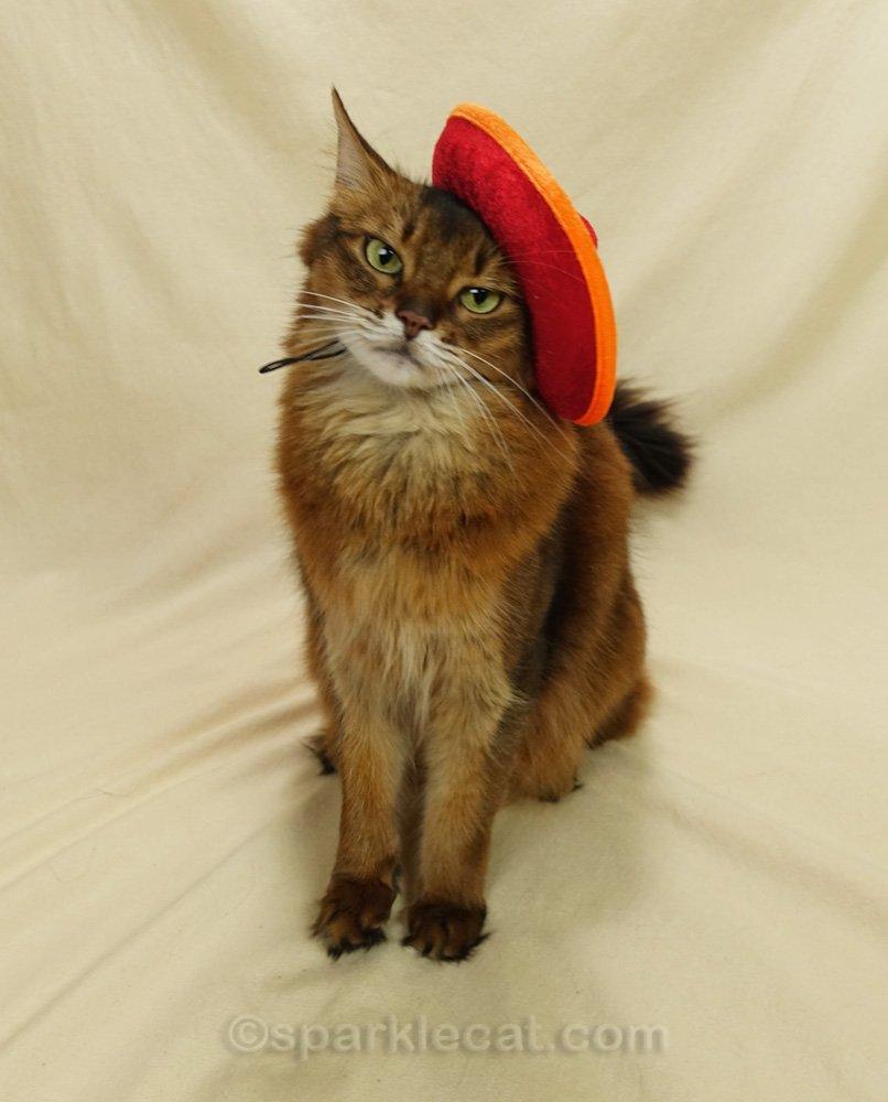 Somali cat wearing an orange sombrero