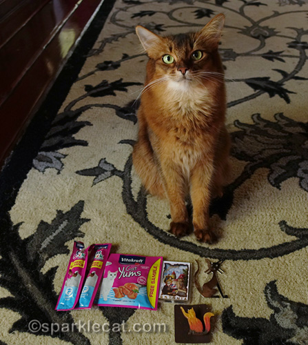 grateful somali cat with gifts